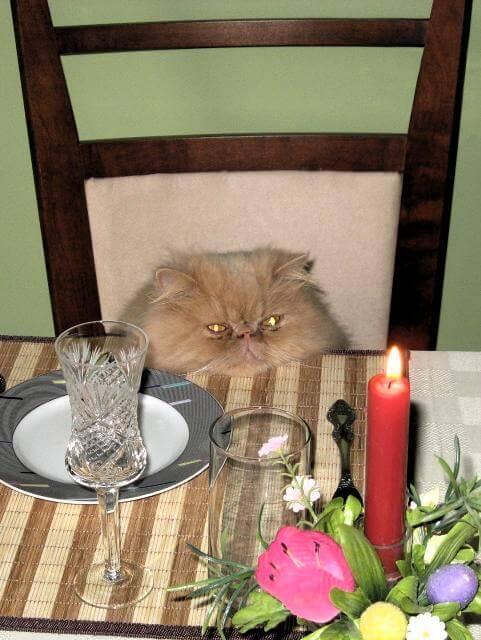 pet owners divorce