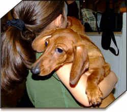 animal protection abuse